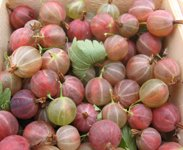 gooseberries in a market