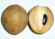 sapodilla with seed