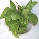 spinach plant