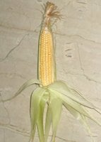 sweet corn with husk