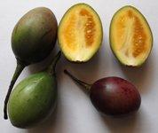 tamarillo-fruit section