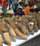 Yam tubers in a market